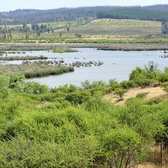 Laguna Ciénagas del Name, Cauquenes